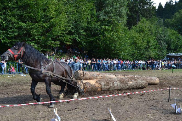 Festival Ecvestru (75)