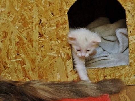 Zdjęcie kotki