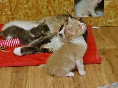 Zdjęcie kociaka