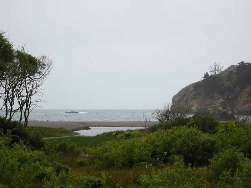Sausalito california Muir beach san francisco (1)
