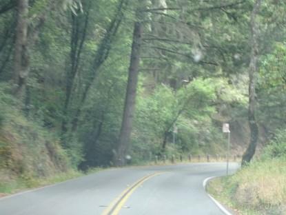 muir woods california sausalito