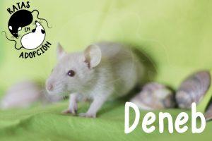 Deneb-1024x683