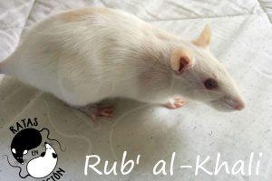 khali1