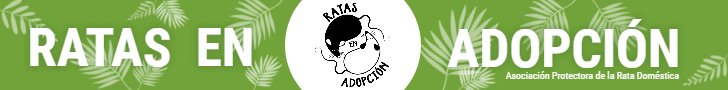 Ratas en Adopción