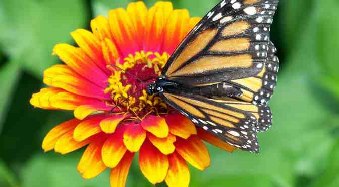 """<span class=""""entry-title-primary"""">Looking for butterflies</span> <span class=""""entry-subtitle"""">This year, let's resolve to help others</span>"""