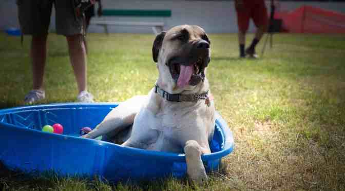 """<span class=""""entry-title-primary"""">Bringing dogs and people together</span> <span class=""""entry-subtitle"""">Muttstock returns for another year of canine fun</span>"""