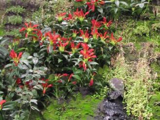Ursprung Vertical Garden