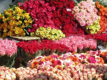 Utrecht Flowers