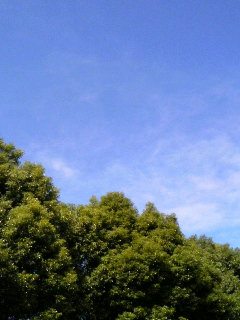 青い空は青いままで…