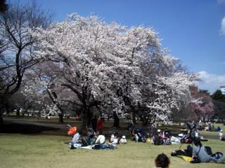 新宿御苑・子ども連れのお母さんたちでいっぱい(2008/03/26昼撮影)