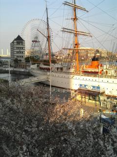 横浜みなとみらいといえば、日本丸と大観覧車(月並みだ?)