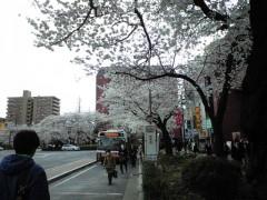 駅前の桜並木も満開