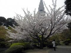 弁殿(新宿御苑・日本庭園、2010年4月9日撮影)