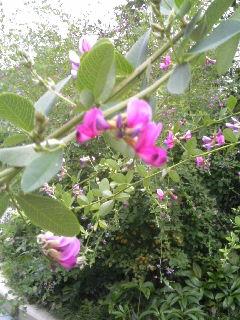 これなんの花?