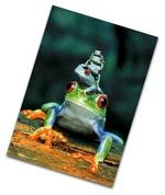 Froggystack