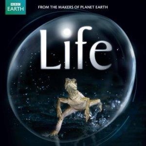 Life-David-Attenborough-Narrated-Version-Blu-ray-0