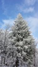 Schnee 2016-3