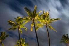 rattanmöbel günstig palme