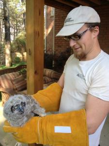 Baby owl Chad helped on rehabbing call