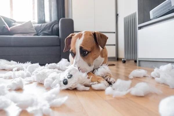 Wenn der Hund die Couch lecker findet, ist das ein Fall für die Tierhalter-Haftpflicht.