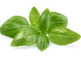Suess Basilikum Blätter