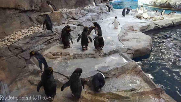 1604_Penguin Exhibit at the Detroit Zoo_001