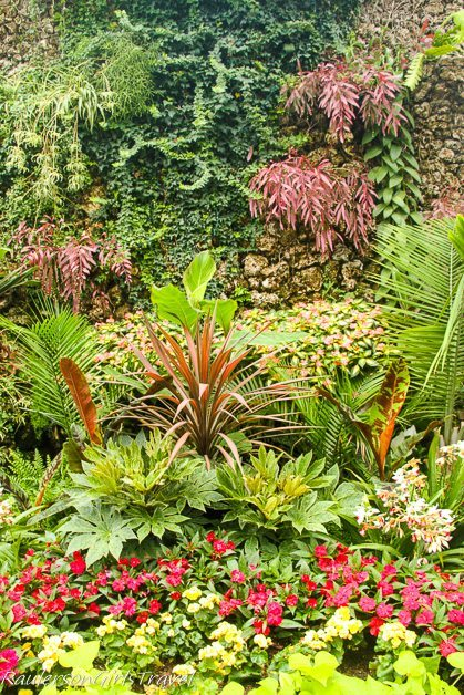 Plants along a wall at the Anna Scripps Whitcomb Conservatory