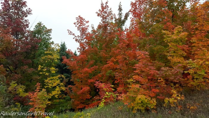 Red, orange, yellow trees Fall in Michigan