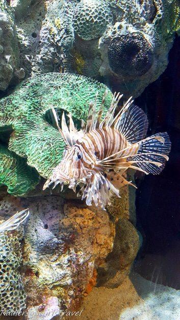 Lionfish at Adventure Aquarium