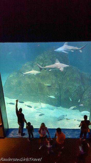Viewing the Sharks at Adventure Aquarium