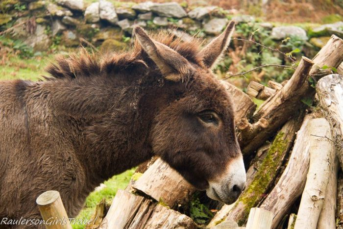 Eddy the donkey at Molly Gallivan's Farm