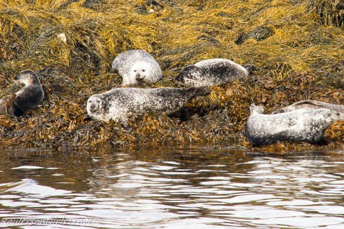 Seals looking at the visitors on Seafari Cruise-Seals on the Seafari Cruise