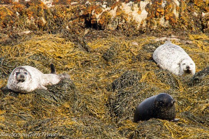 Seals on Seafari cruise