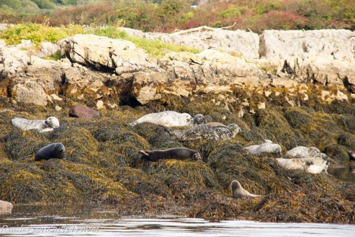 Seals sunning themselves in Kenmare Bay