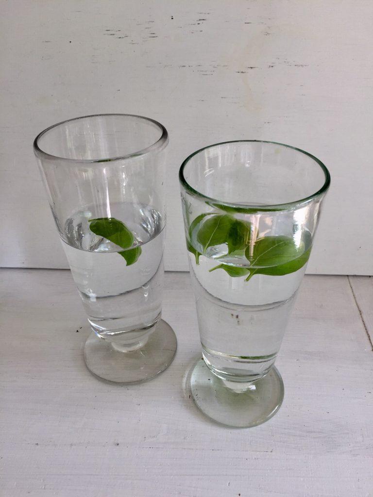 Wasser mit Basilikum ist oberlecker