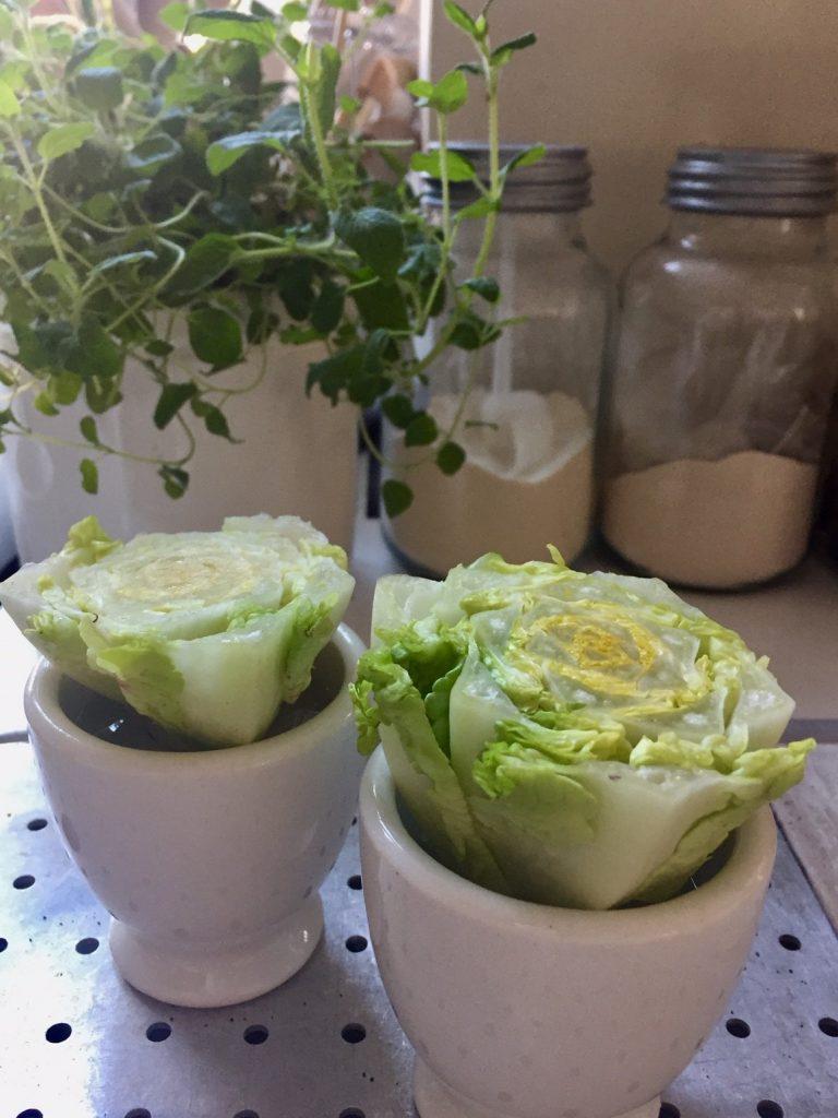 Ostern zuhause Salat sprießen lassen