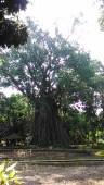 Kebun Raya Bogor With Meican & Weni (18 Juni 2015) (73)