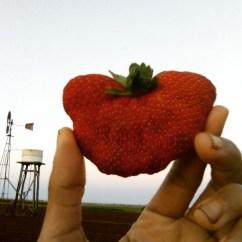 kupu-kupu strawberry