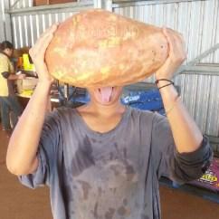 ubi terberat yang pernah saya lihat 6,4kg