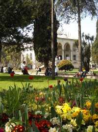 Blühende Blumen im Park des Topkapi Serail in Iatanbul