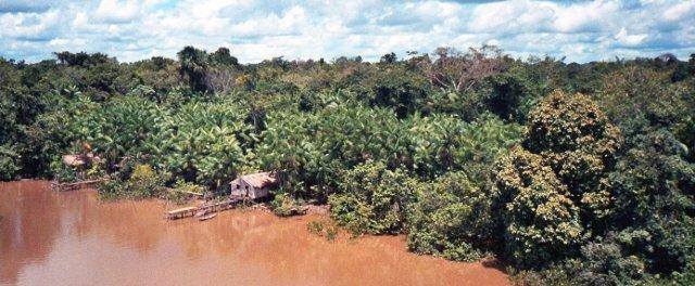 Amazonas Farbe