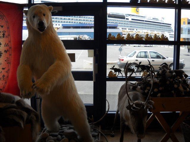 Eisbär im Souvenirladen Honnigsvag