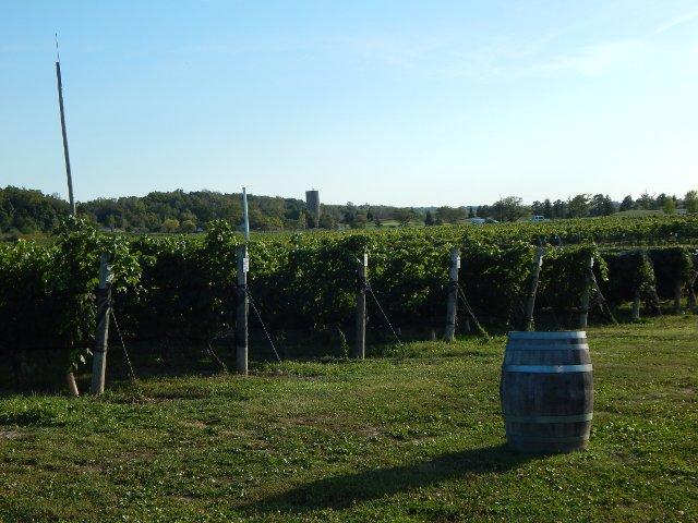 Niagara Weinregion