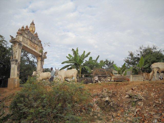 Ochsenkarren in Kampong Tralach