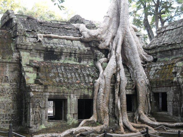 Angkor, verwunschener Tempel Ta Prohm