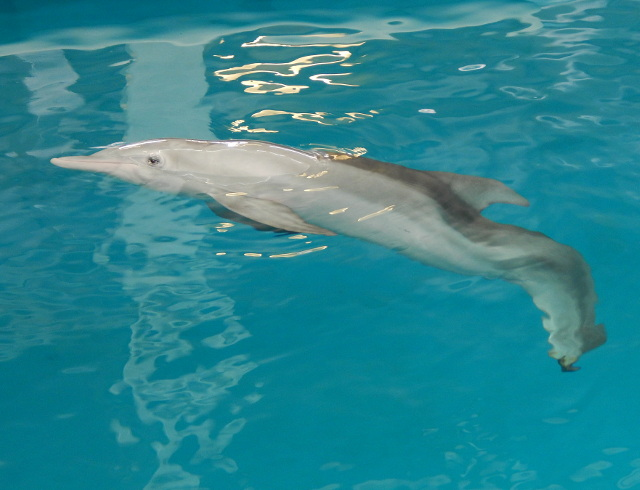 Filmheld Winter im Clearwater Aquarium