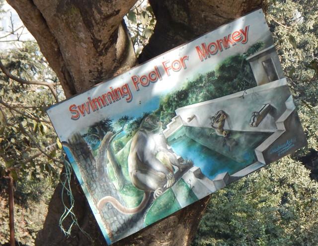 Ein Swimming Pool für Affen bietet der Tempel Swayambhunath in Kathmandu