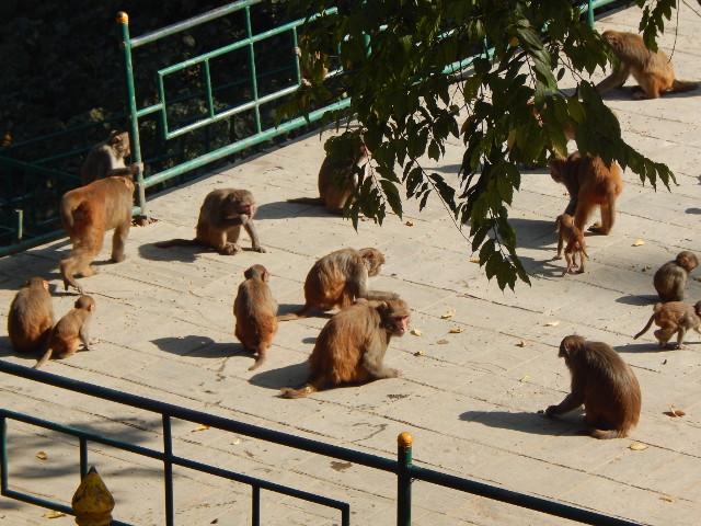 Die Affen vom Monkey Tempel