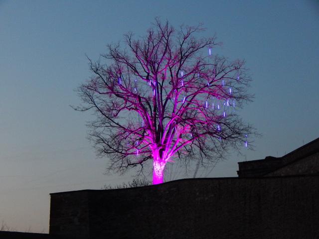 Lila angestrahlter Baum