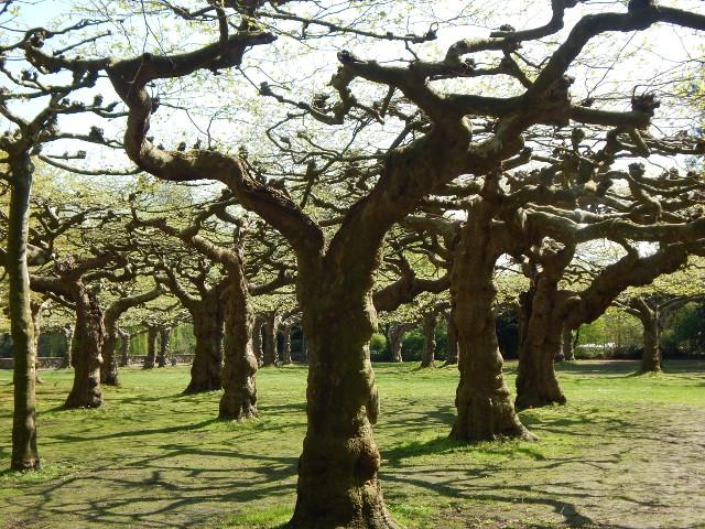 Der Schönwasserpark in Krefeld mit urwüchsigen Bäumen.